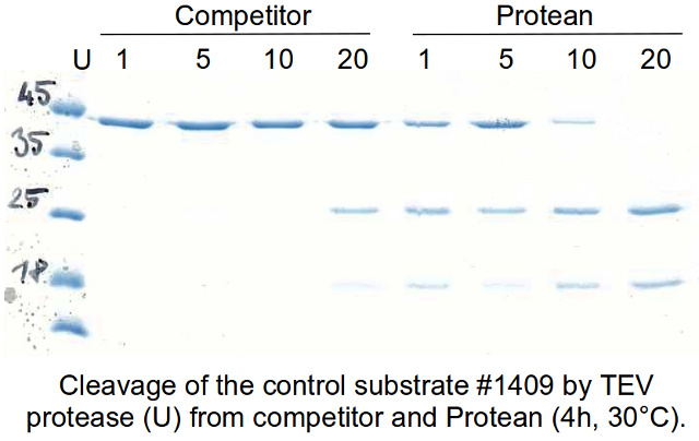 3C and TEV proteases substrate